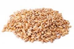 Fôr hvete