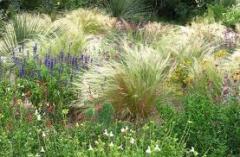 Цветы многолетние семена (злаки декоративные,