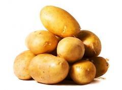 Картофель, сорт миневра, ривьера, купить картофель