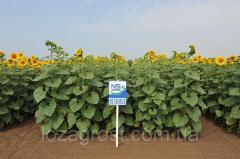 Семена подсолнечника НС Таурус экстра евро-лайтинг