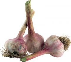 Winter garlic. Garlic wholesale and retail, Garlic