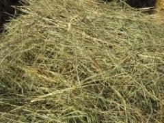 Hay / wheat straw – 760 UAH/ton. Export is