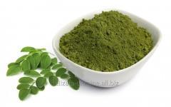 Матча (зеленый чай) порошок