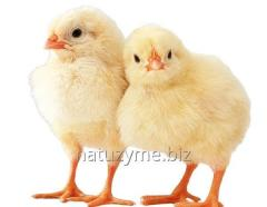 Starter for broilers (granule) of 100%