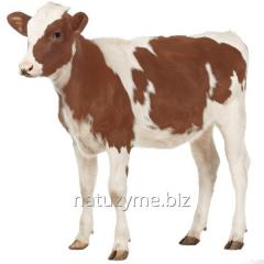 Premix for calfs of 2, 5%
