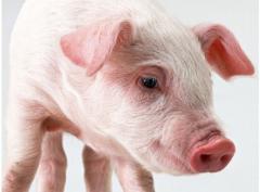 """Минеральный бленд для свиней """"SHENMIX MIN"""