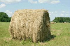 Сено из травяных смесей