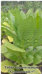 Семена тютюну