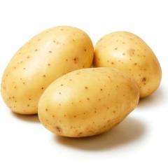 Продаем картофель оптом