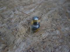 Болт накатанный ступицы колеса Фамарол Z511