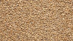 The wheat malt