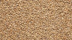 The wheat malt