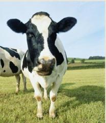 Suplementos nutritivos para los animales
