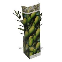 Оливковое дерево Europaea