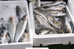 Рыба мороженая оптом Украина