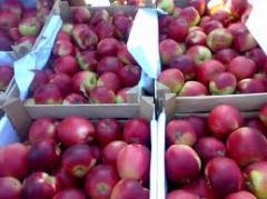Apples winter Aydared