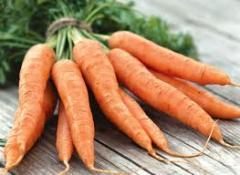 Carrots fresh grown up on environmentally friendly