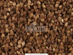 Buckwheat garden