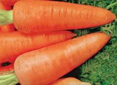 Carrots of a grade of Abako, from the producer