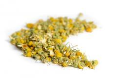 Chimiste de camomille (Matricaria chamomilla) de