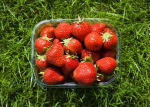 Strawberry wholesale for productions of