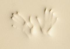 Vyazkoelastichny foam rubber