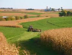Культуры зерновые Украина