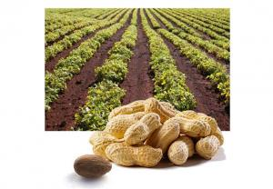 Groundnut meal. Delivery across Ukraine. To buy