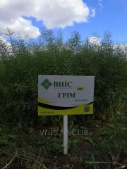 Семена озимого рапса Грим (РС+ИМИ)