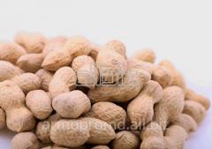 The peanut is ground