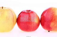 Яблоки натуральные оптом