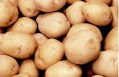 Картофель, купить картофель молодой, купить