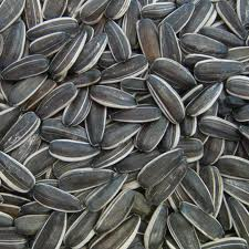 Семена подсолнечника, подсолнечник оптом, зерна