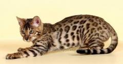 Корм для кошек и котов