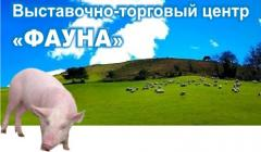 Vitamins for domestic animals, Ukraine. Nutril