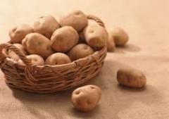 Картофель столовый, Картофель, Плодоовощные культуры, Черниговская область