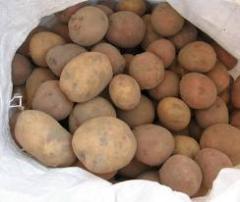 Картофель среднеранний, Картофель среднеспелый, Картофел, картошка
