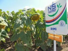 Семена подсолнечника Рими (Clearfield) Сербия