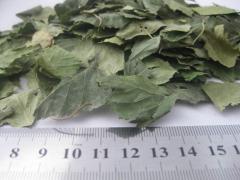 Birch, leaf