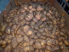 Картофель 2 сорт Мелоди