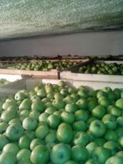 Fruit wholesale