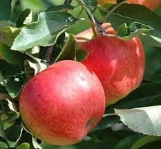 Apples Aydared