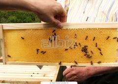 Мед пчелиный натуральный, купить натуральный