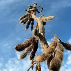 Семена сои Сенсор (под Раундап)