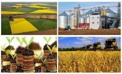 Украинский Агрохолдинг  купит Агрофирму сельхоз