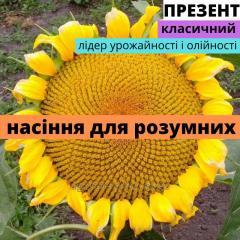 Семена подсолнечника гибрид Презент