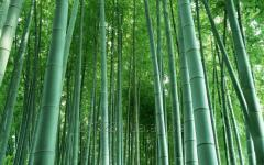 Стволи бамбукові