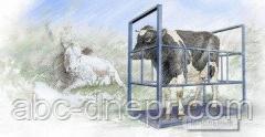 Весы животноводческие