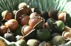 Macadamia oil not refined