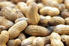 Поставки арахиса в скорлупе и ядрами,Импорт